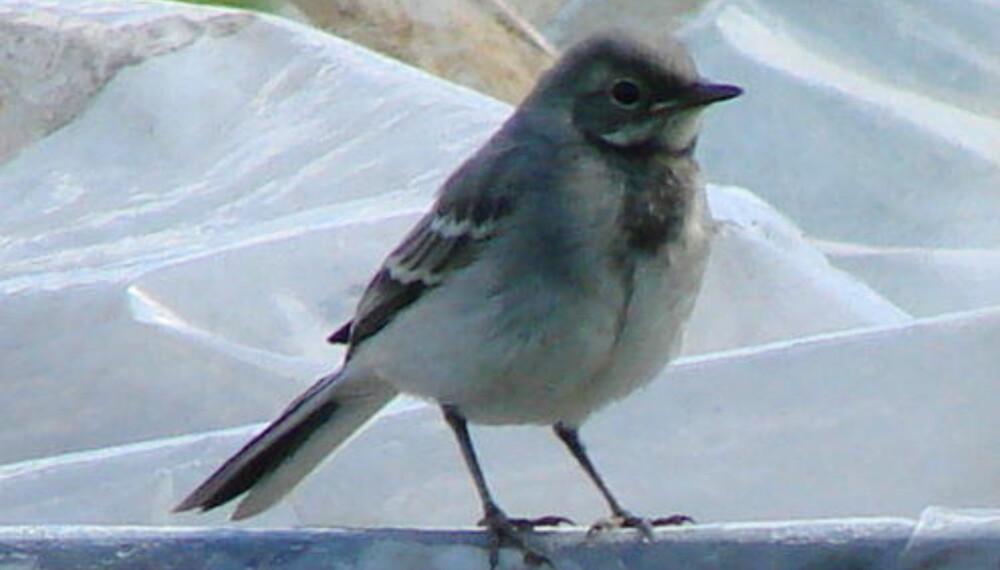 aa738244 Flere religioner tar utgangspunkt i fugler når de skal forklare hvordan  verden ble til. Den japanske skapelsesberetningen Ainu forteller at en  liten ...