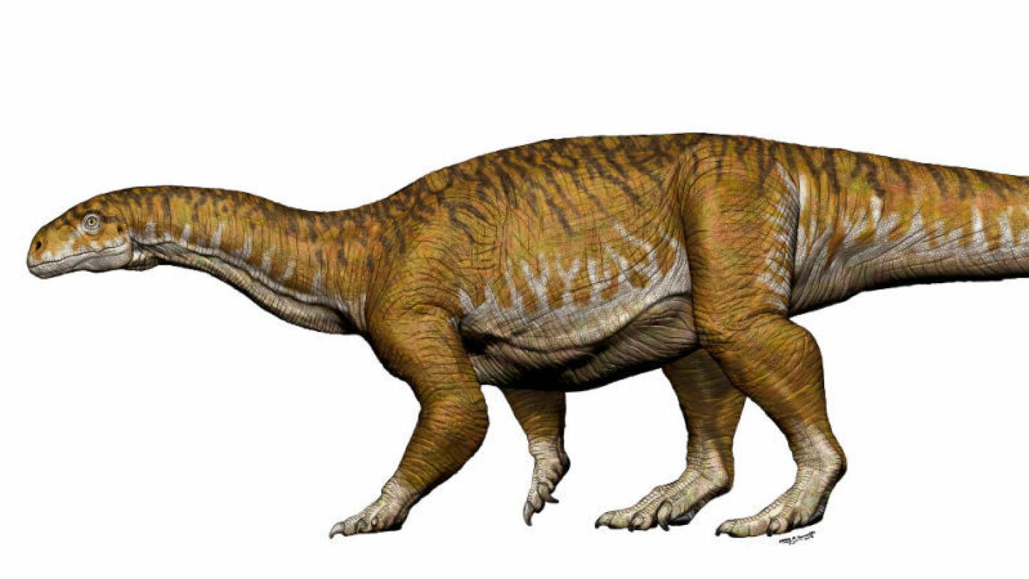 Dette Dinosaur Funnet Kan Være En Av De Viktigste I Nyere Historie
