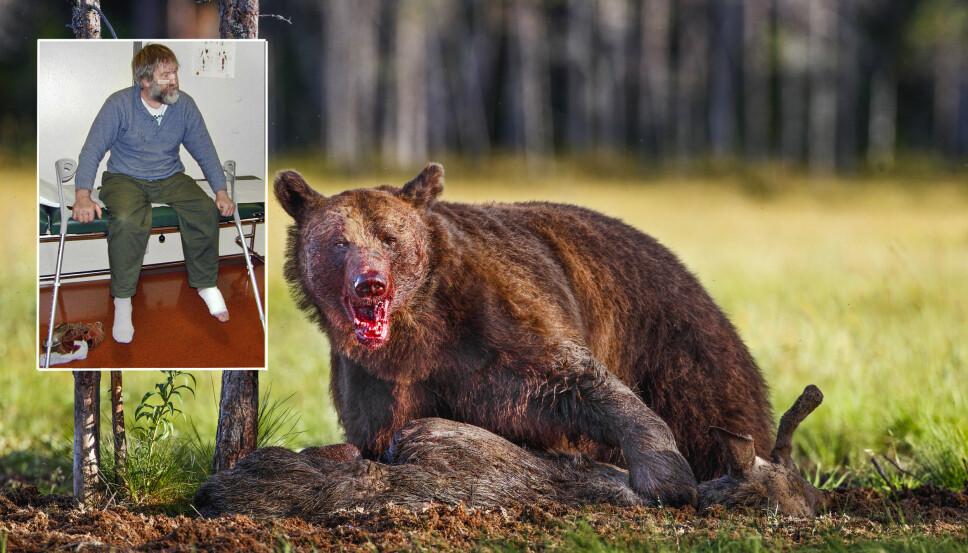 <b>ANGREPET:</b> I 2000 ble sauebonden Arne Sigmund Øvergård angrepet av bjørn. Bjørnen på bildet er ikke samme bjørn som angrep Arne.