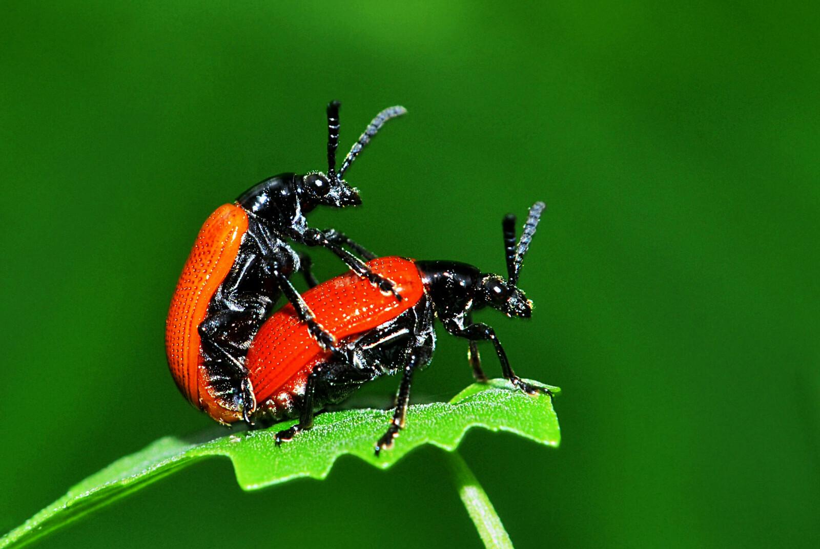 <b>SKADELIG VARME: </b>Kan hetebølger være årsaken insektsdøden?<b> </b>