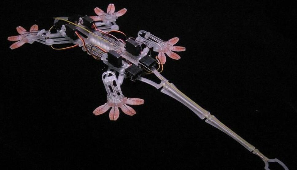"""<b>KOPI:</b> Forskere har laget en såkalt """"Stickybot"""", der gekkoens ekstreme klatreegenskaper er kopiert."""