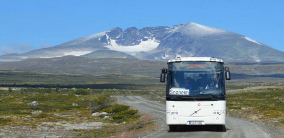 <b>TA BUSSEN:</b> Fylkesmannen i Oppland håper at så mange som mulig tar bussen inn til startpunktet til toppturen til Norges nasjonalfjell, Snøhetta for å skjerme villrein og moskus.