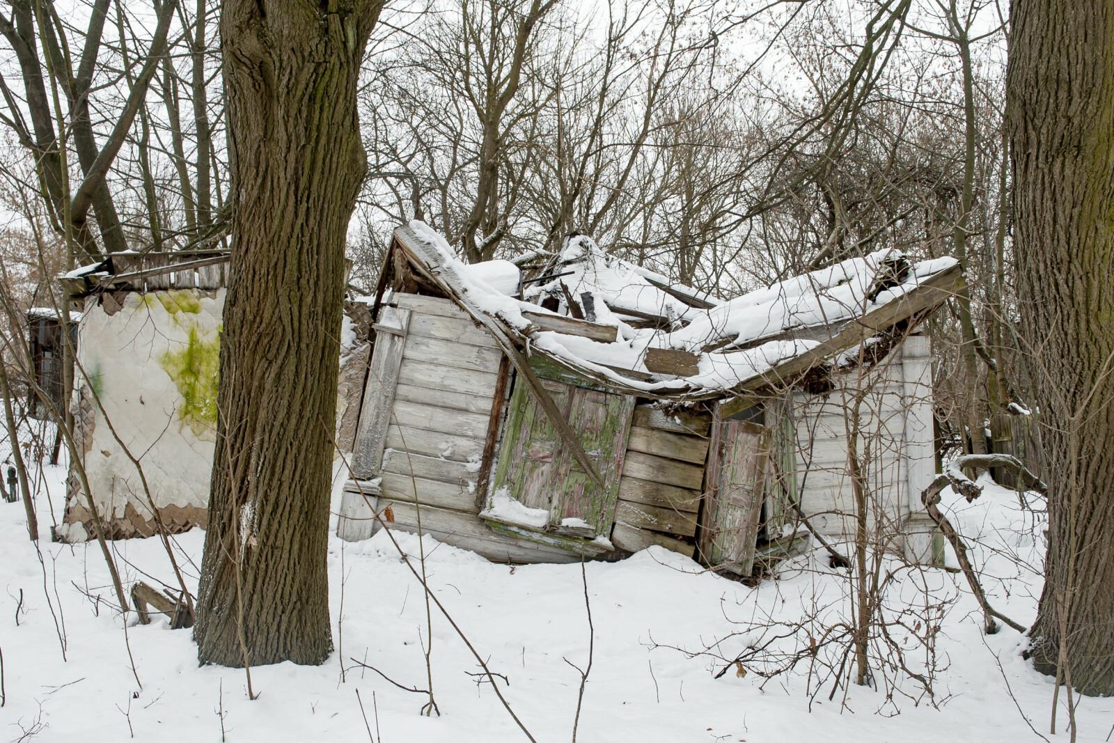 <b>TAR TILBAKE:</b> Landsbyen Zalissya. Befolkningen ble evakuert i 1986 med beskjed om at de kunne få vende tilbake snart. Det har ennå ikke skjedd. I Zalissya kan en se hva som skjer når menneskene forsvinner og naturen tar tilbake.