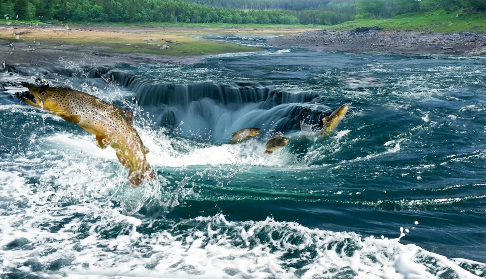 <b>SOM ET BADEKAR:</b> Ved jevne mellomrom forsvinner alt vannet i Engavatnet. Det er som om noen har trekt ut proppen i badekaret.