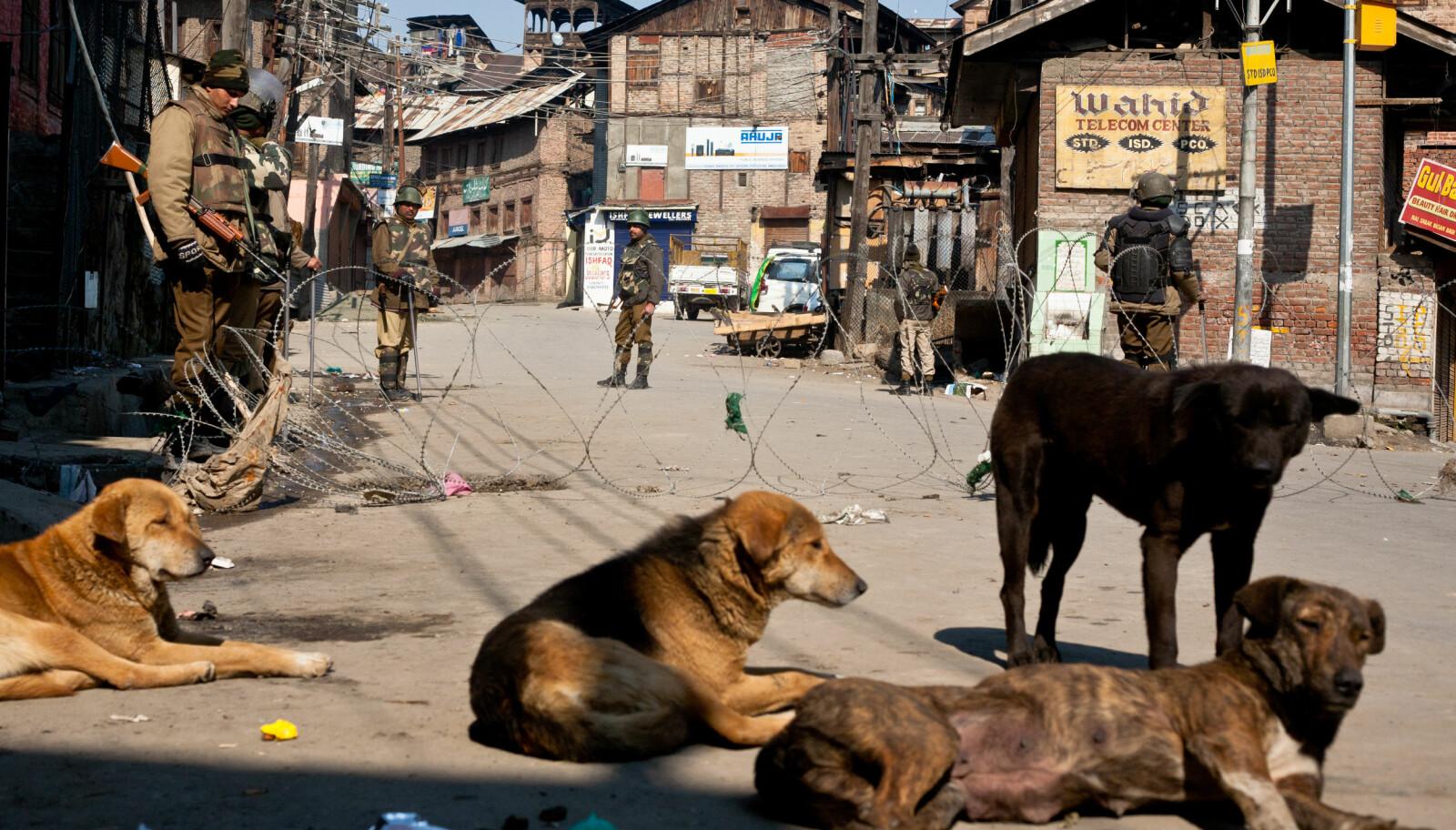 <b>GATEHUNDER:</b> Vi understreker at disse indiske hundene kun er ment som illustrasjon. Vi vet ingenting om sivilstatusen deres.