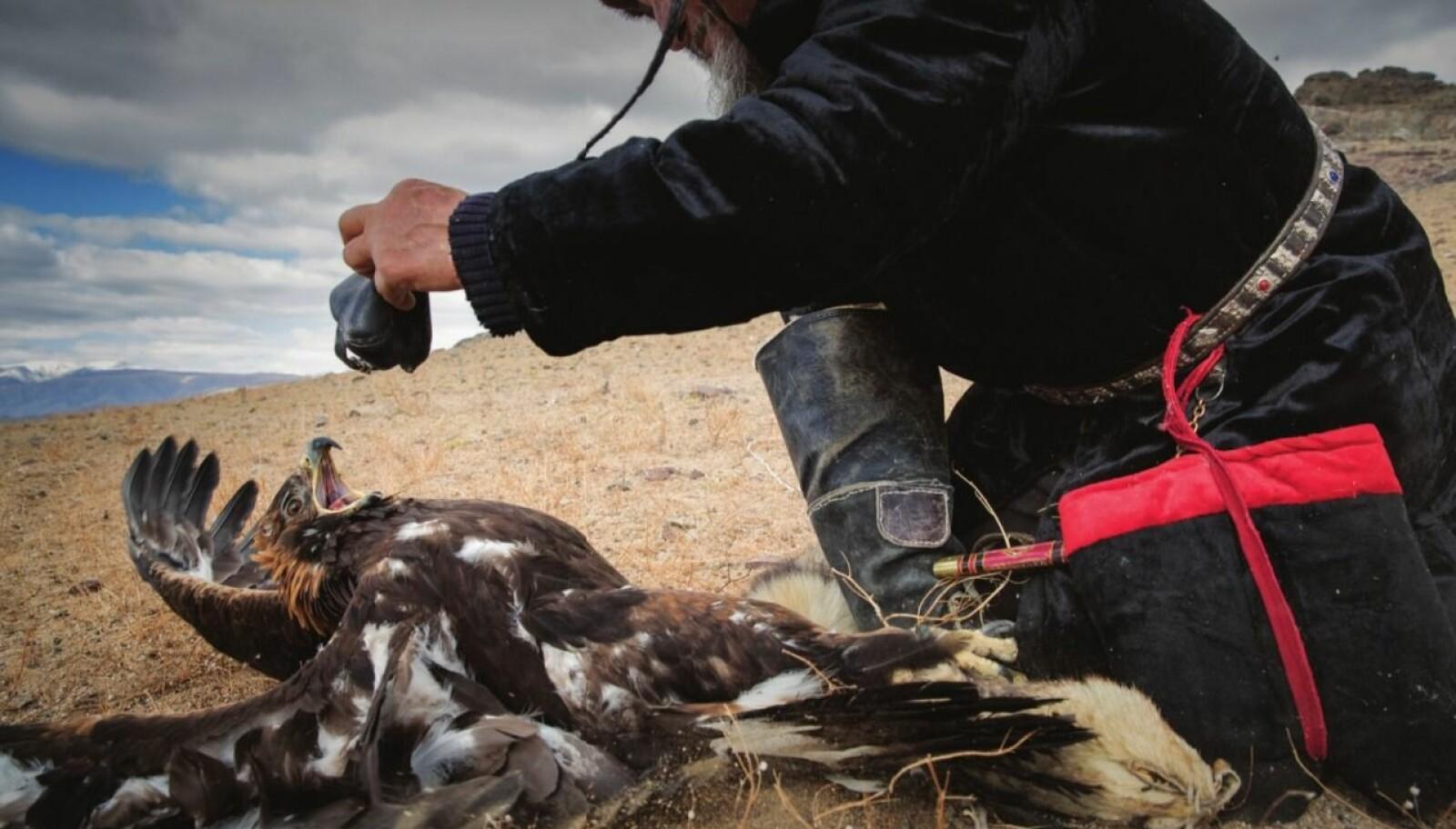 <b>LITE POPULÆRT:</b> Når hetta skal på igjen er det full kamp mellom fugl og eier.