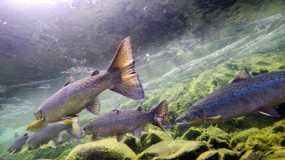 BEHOV: Klarer du å dekke fiskens behov, så øker mulighetene for å få fisk.