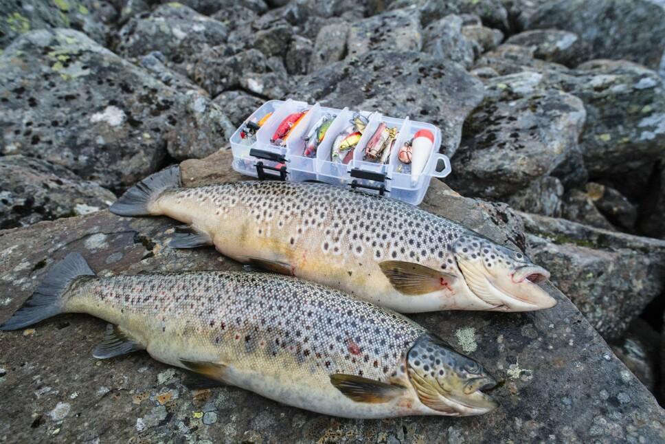 <b>UTSTYRSLISTE: </b>Du trenger ikke veldig mye utstyr for å fange fisk, men det hjelper med et variert utvalg av sluker.